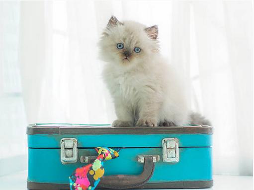 Comment prendre le bateau ferry avec son chat ou son chien ?